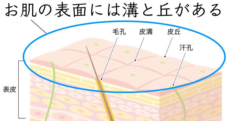 肌の構造 表皮 図